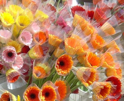 Sleeved gerberas